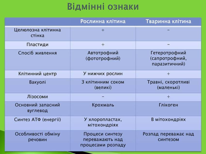 Відмінні ознаки рослинної і тваринної клітини