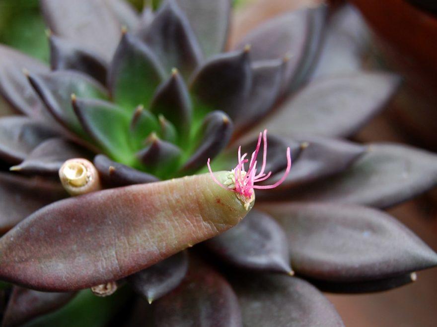 Видозміни пагонів рослин