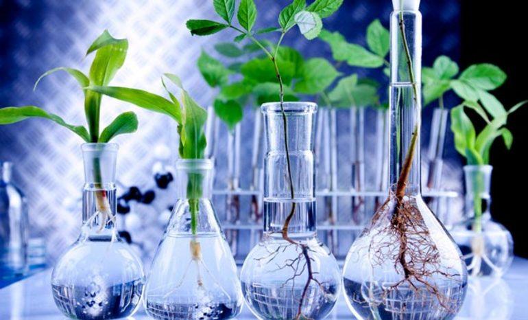 Види біотехнології
