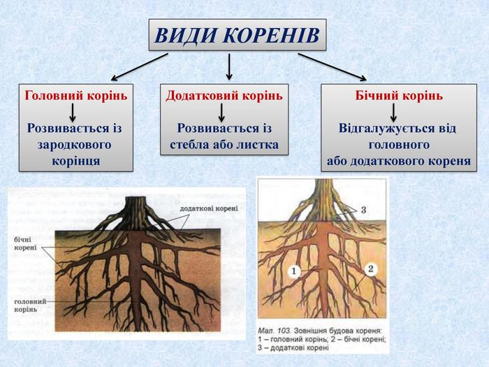 Види коренів - приклад