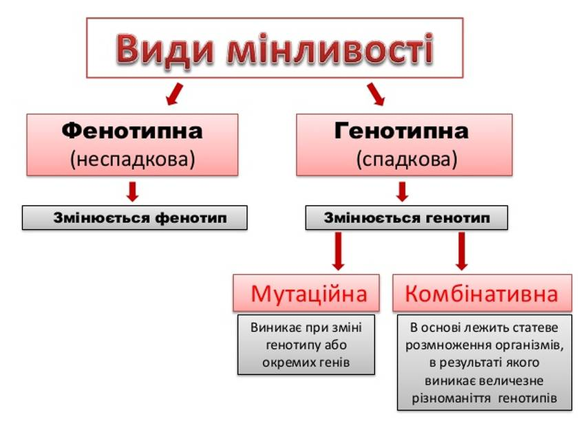 Види мутаційної мінливості
