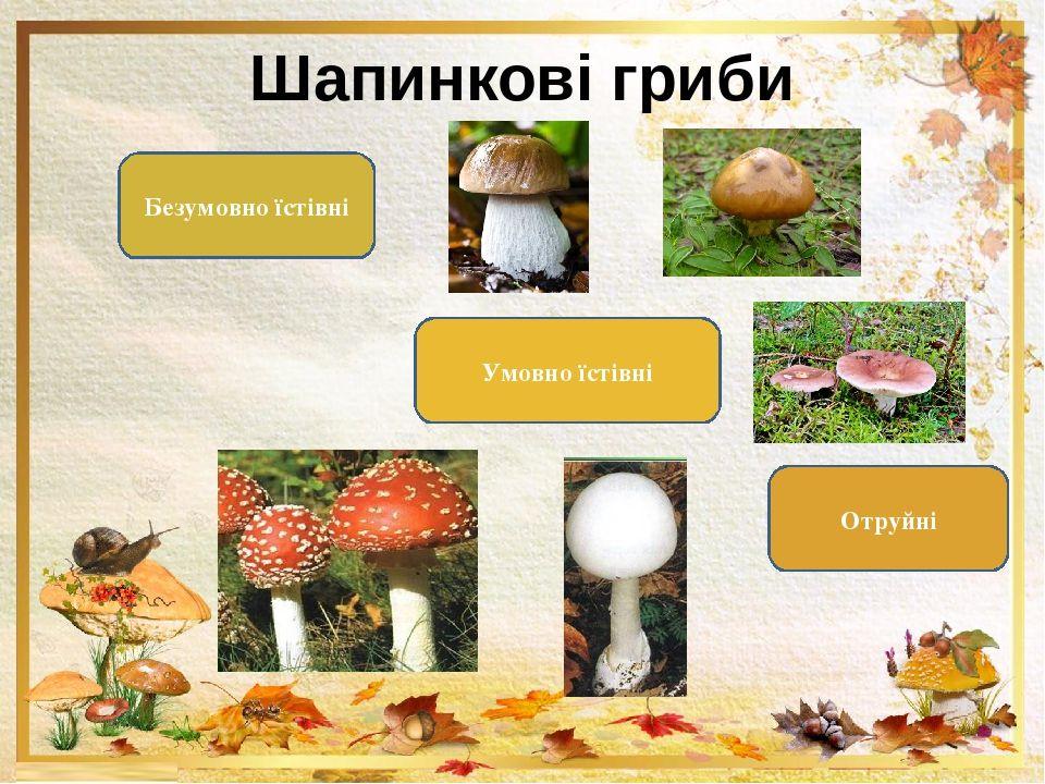 Види шапинкових грибів