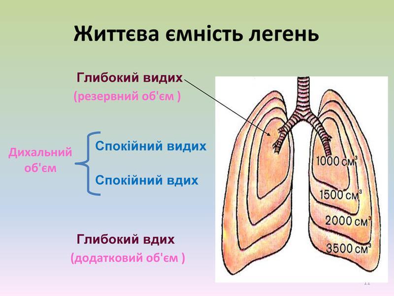 Життєва ємність легень