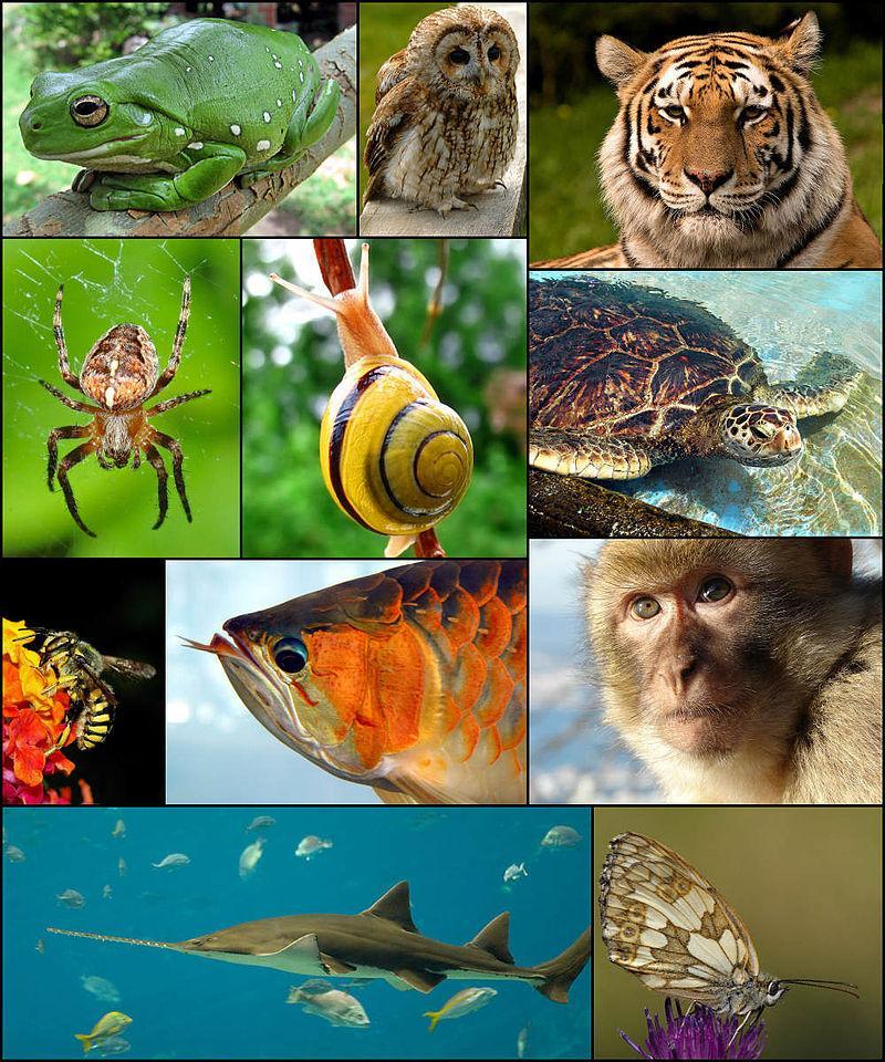 Жива природа - фауна