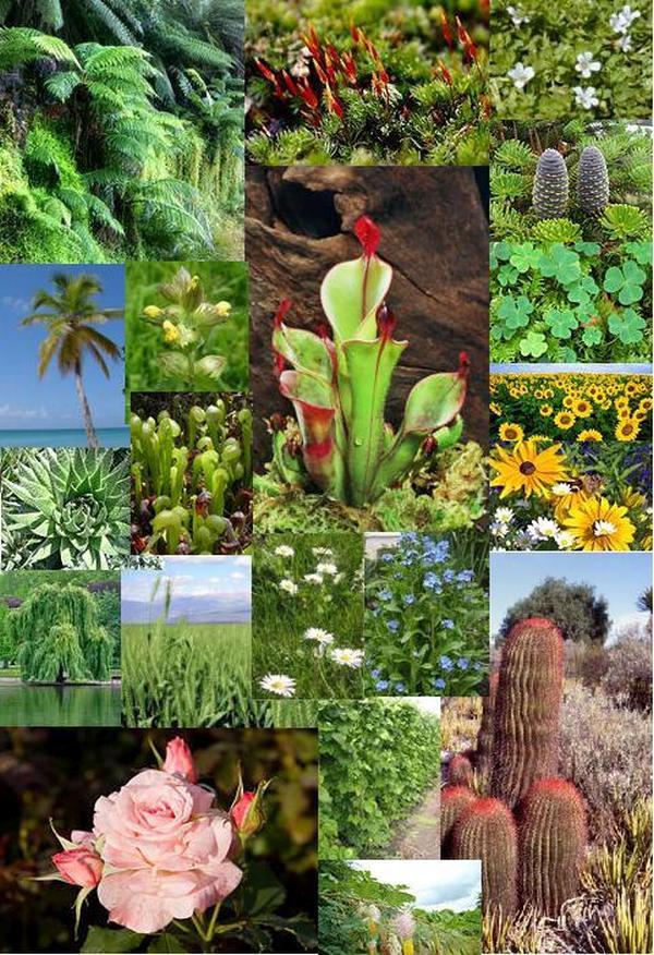 Жива природа - флора