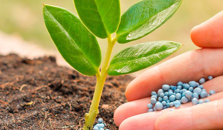 Живлення рослин