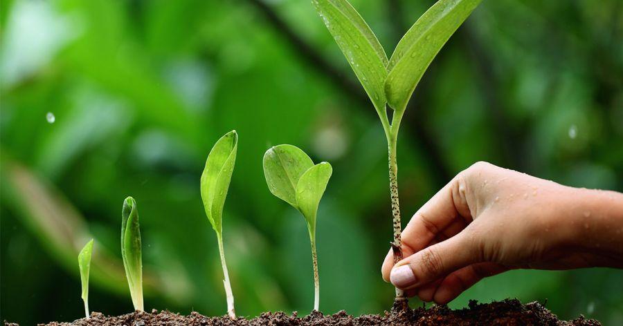 Живлення рослин3