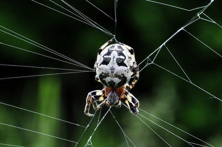 Загін павуків