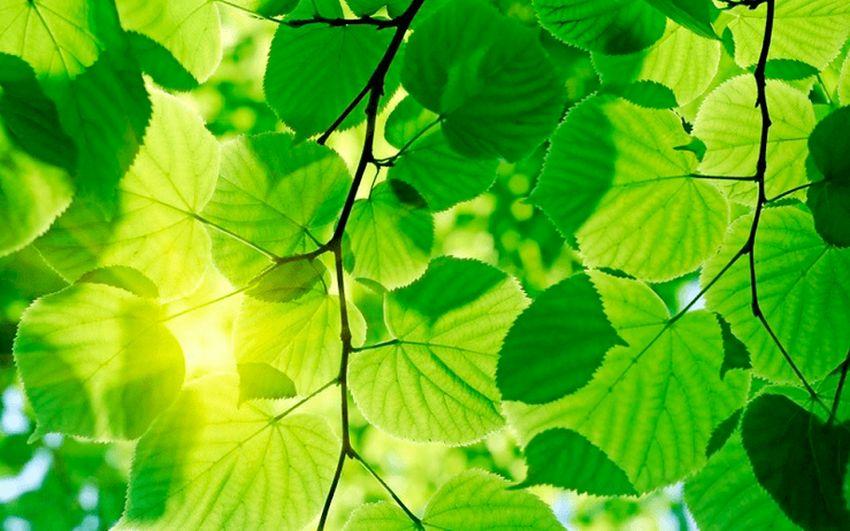 Значення фотосинтезу