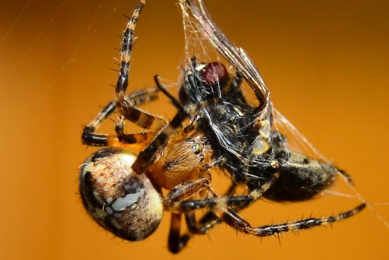 Значення павукоподібних в природі
