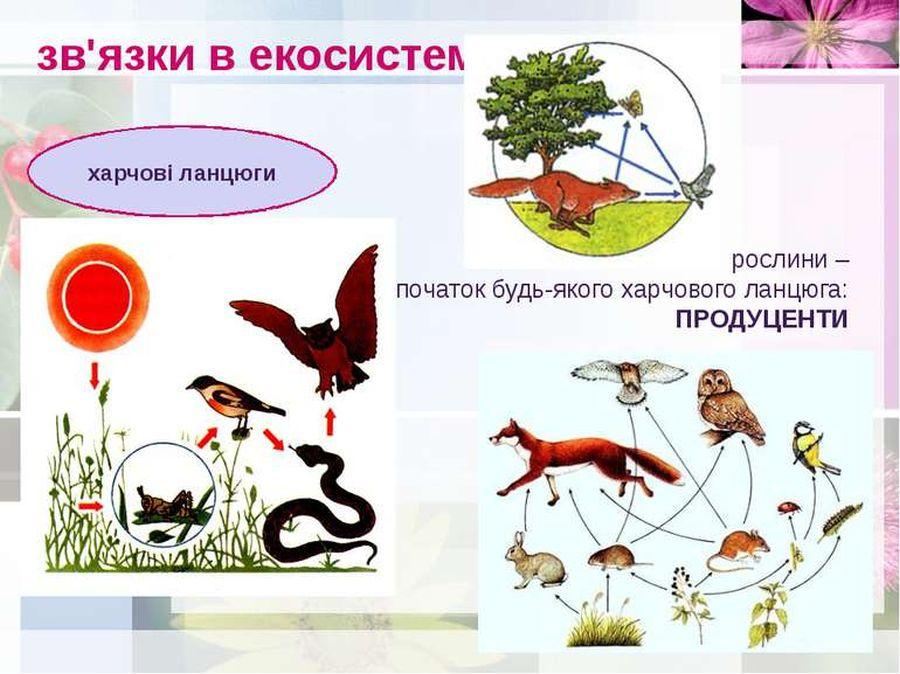 Зв'язки в екосистемі
