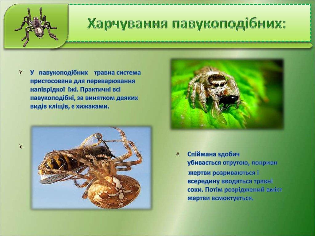 харчування павукоподібних