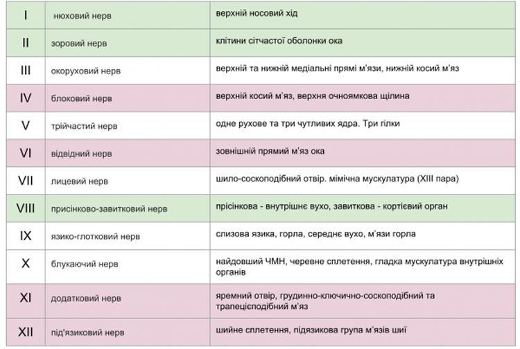 Черепні нерви, кількість та функціональні види