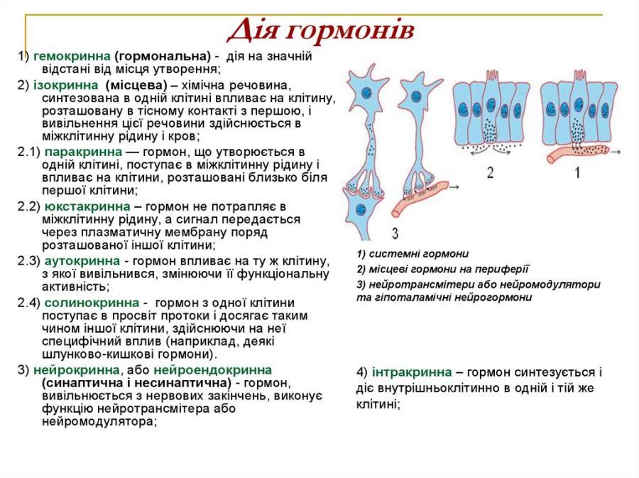 Дія гормонів