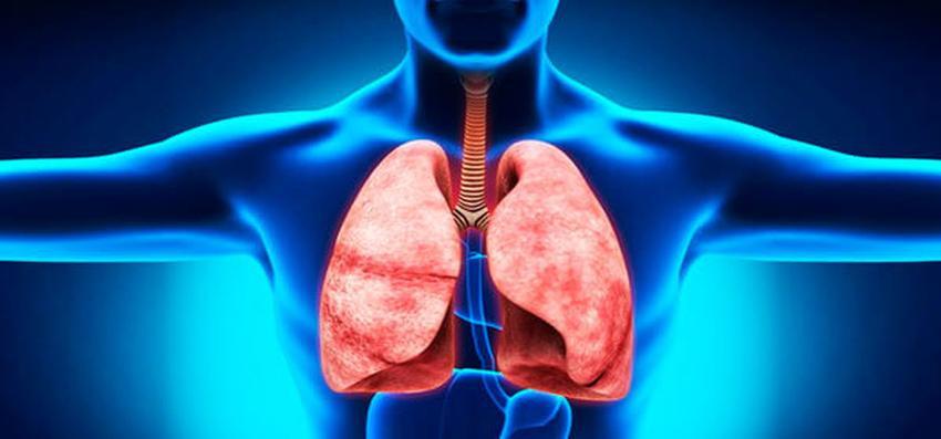 Дихальна система людини - малюнок2