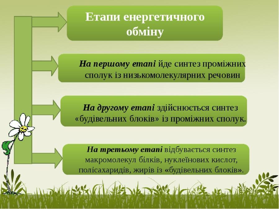 Етапи енергетичного обміну2