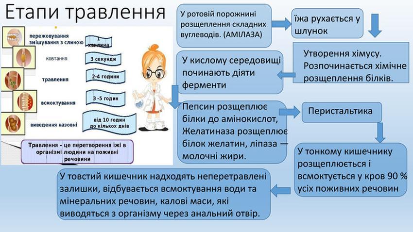Етапи травлення