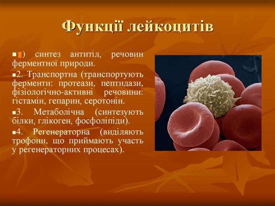 Функції лейкоцитів