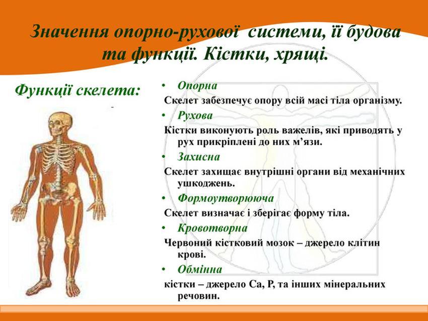 Функції скелета людини