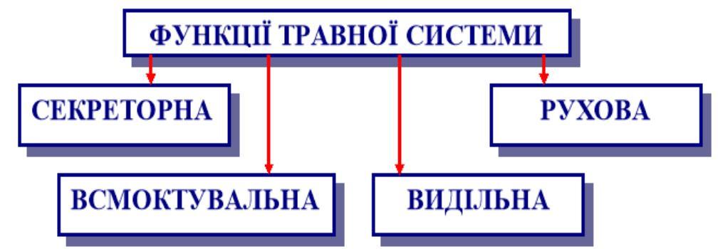 Функції травної системи людини