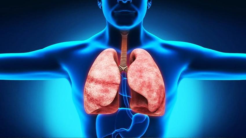 Газообмін в легенях