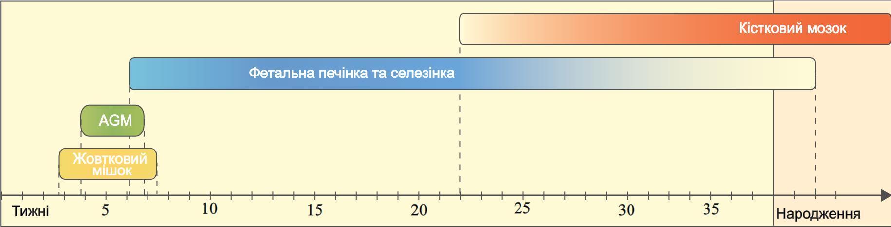 Гемопоез в ембріональний період
