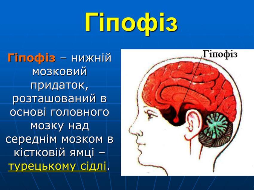 Гіпофіз - визначення