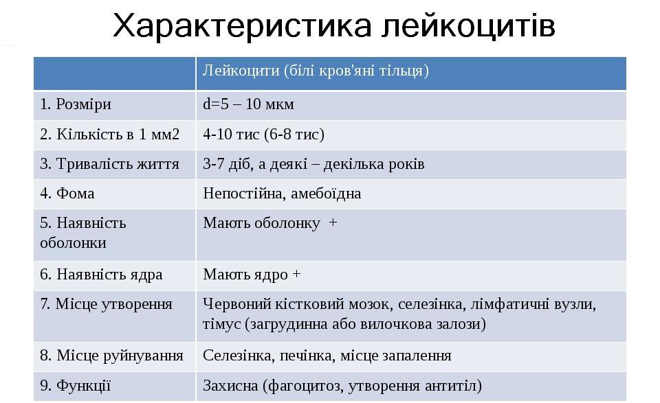 Характеристика лейкоцитів