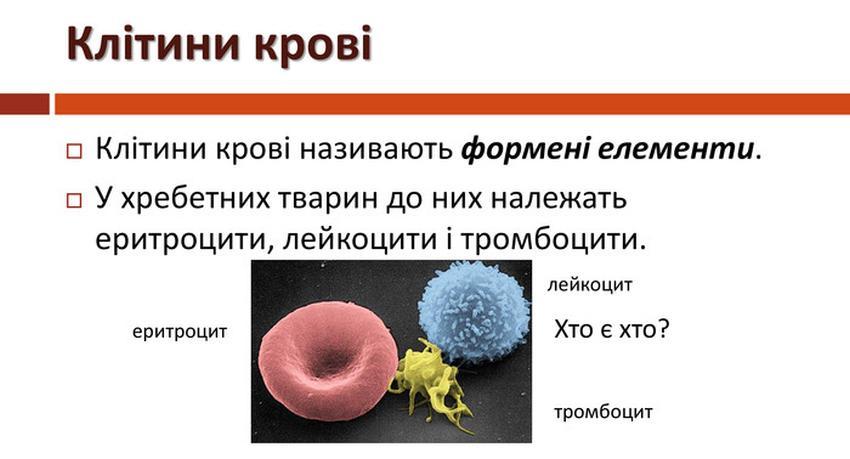 Клітини крові