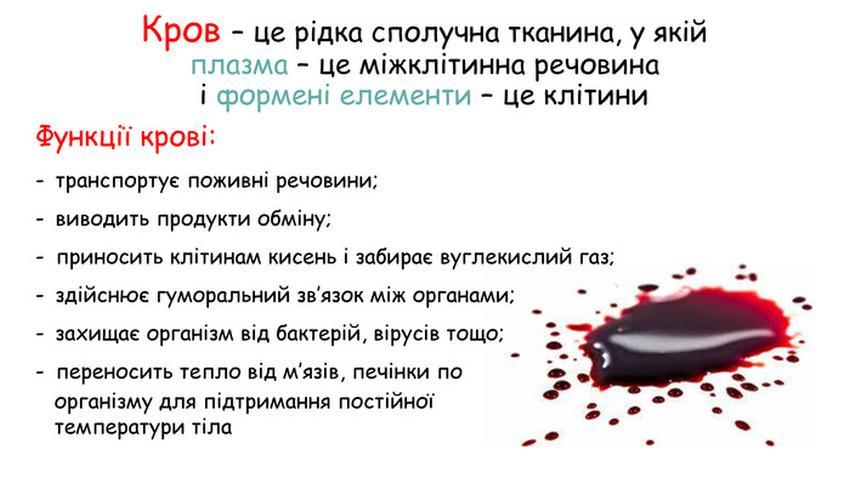 Кров - визначення і функції