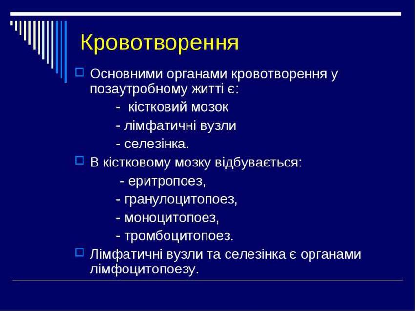 Кровотворення - органи гемопоезу