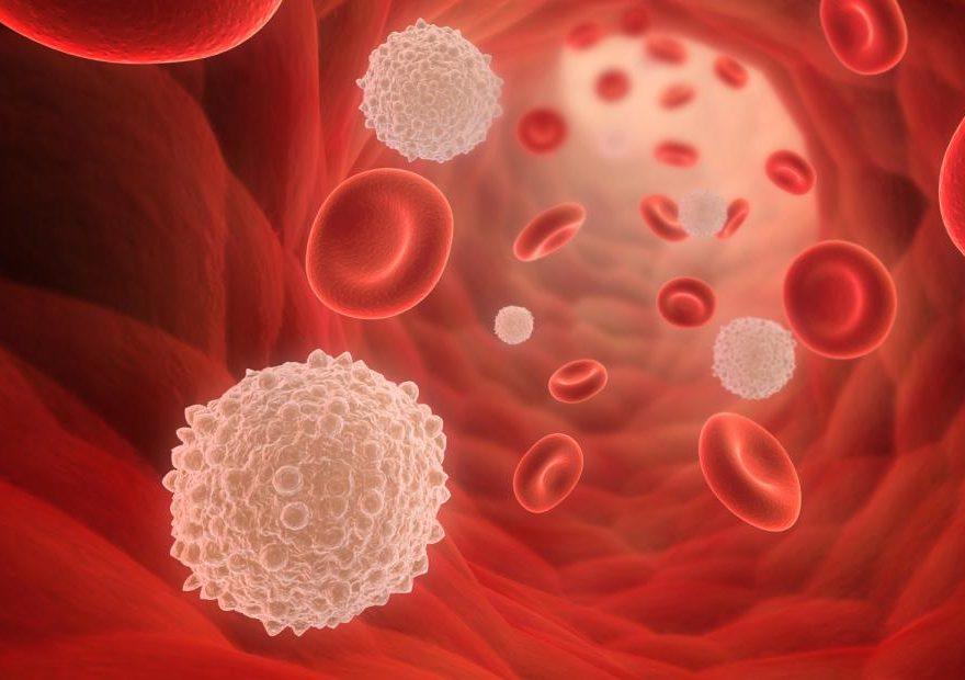 Лейкоцити в крові