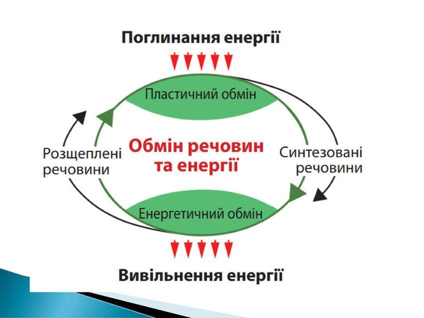 Обмін речовин та енергії2