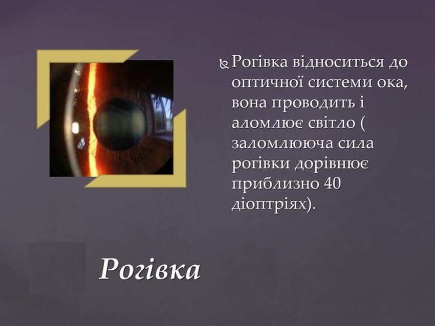 Опис і будова рогівки