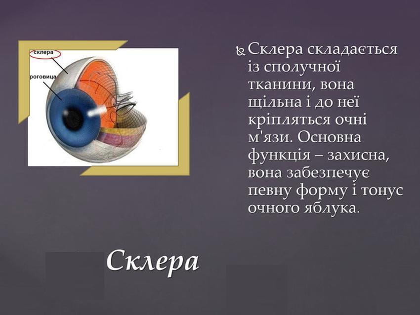 Опис і функції склери
