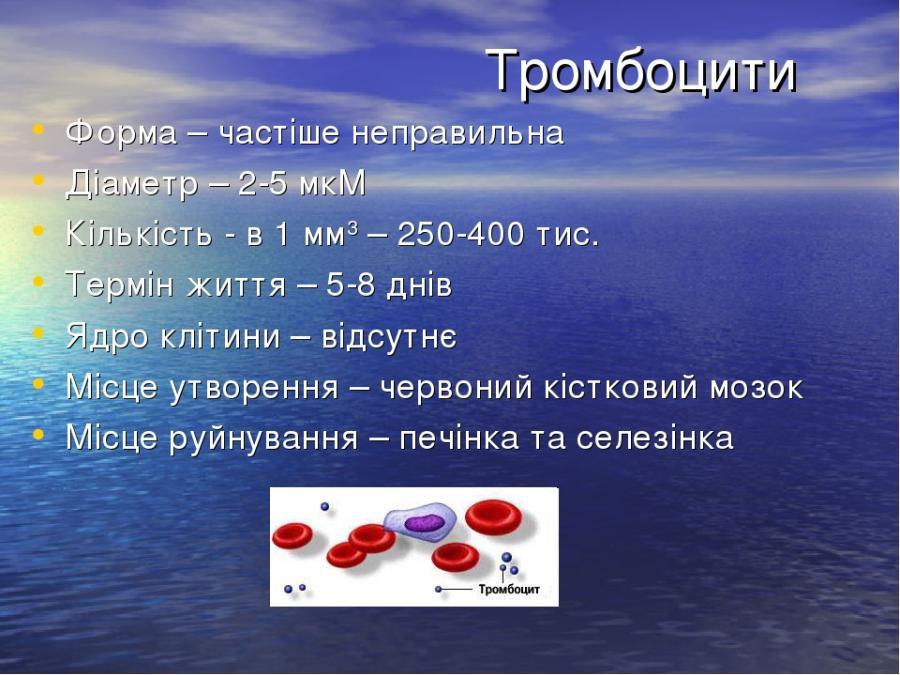 Опис тромбоцитів
