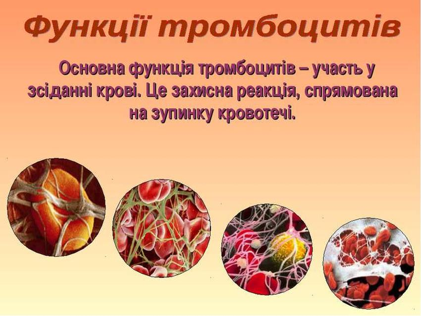 Основна функції тромбоцитів