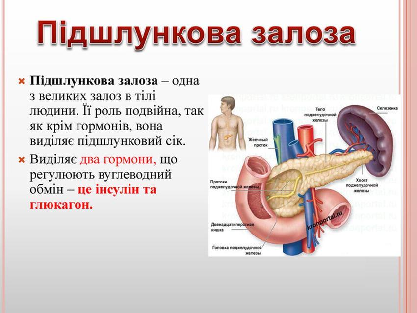 Підшлункова залоза - функції