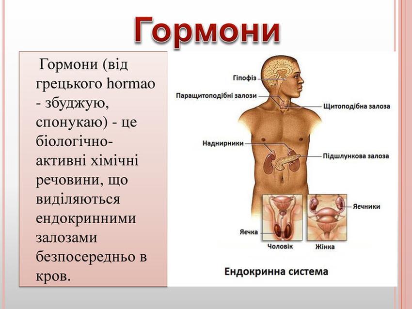 Що таке гормони