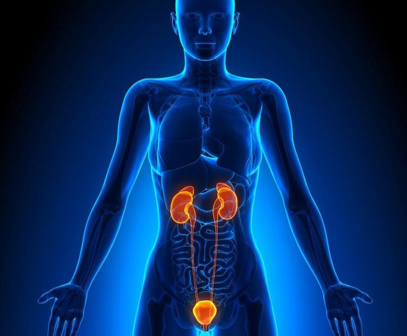 Сечовидільна система людини