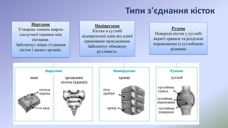 Типи з'єднанні кісток
