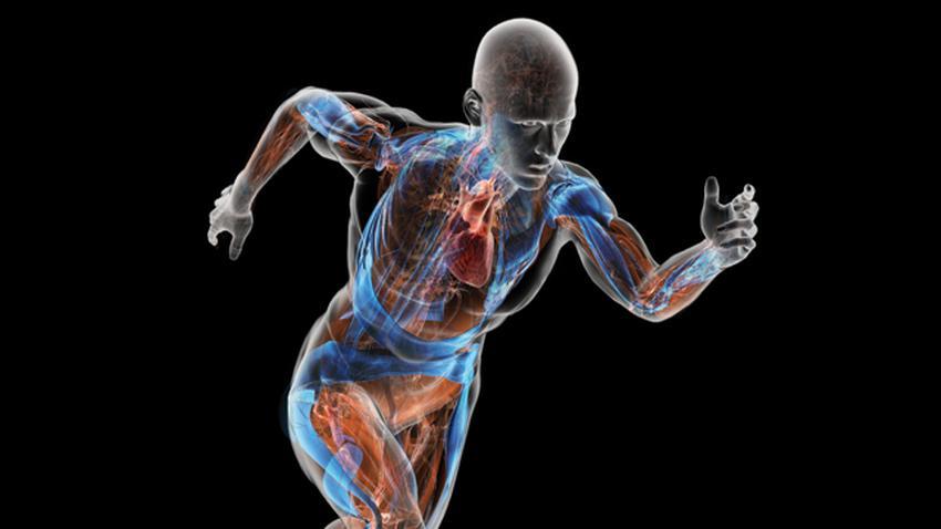 Внутрішні органи людини