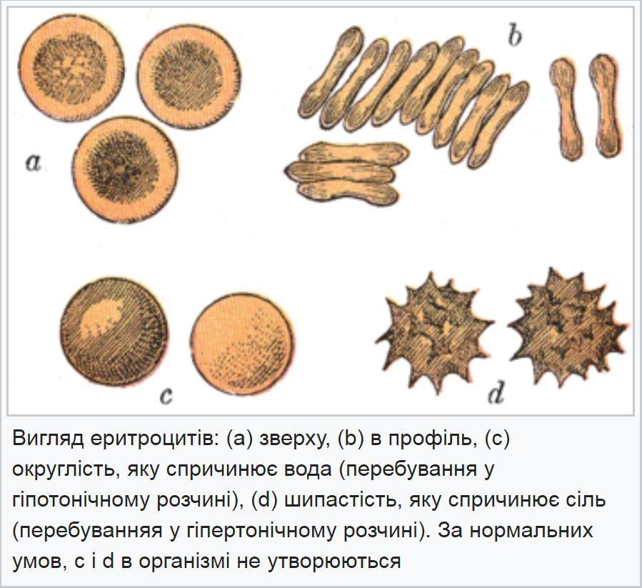 Вигляд еритроцитів