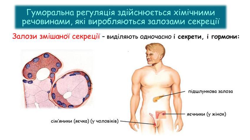 Залози змішаної секреції