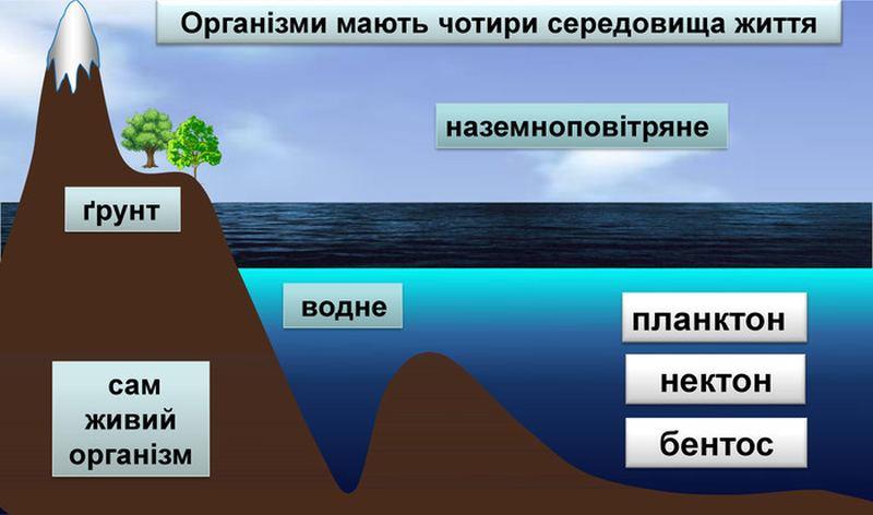 Чотири середовища існування життя
