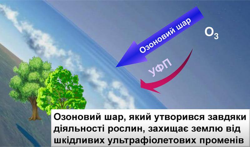 Функції озонового шару