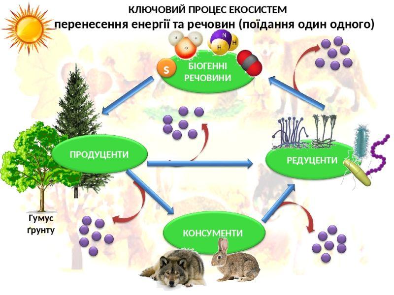 Ключовий процес екосистеми