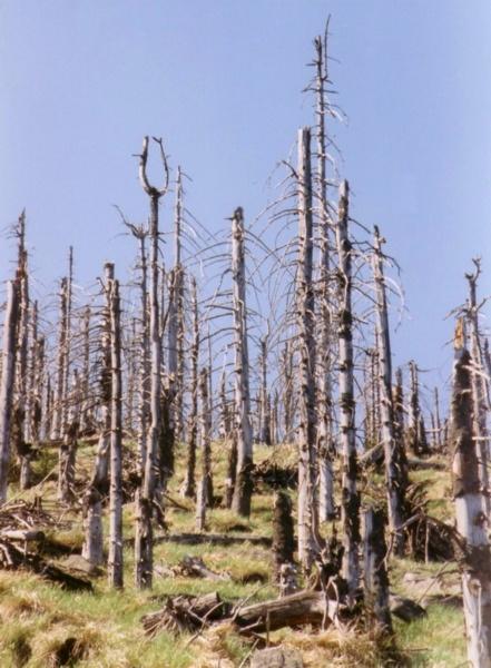 Ліс пошкоджений кислотним дощем