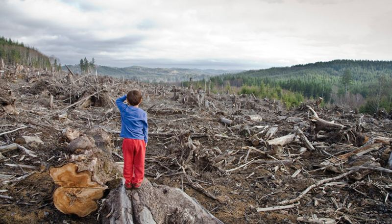 Лісовий апокаліпсис в Карпатах