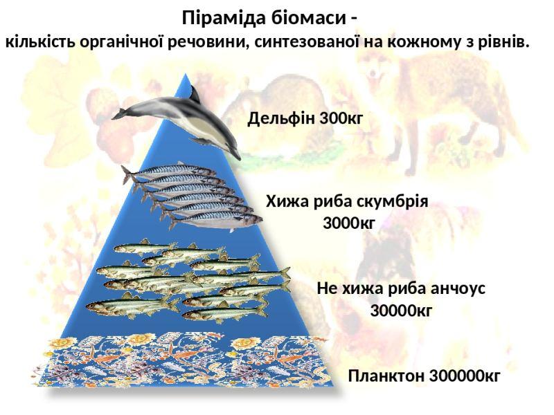 Піраміда біомаси